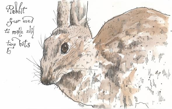 01-10 - rabbit sm