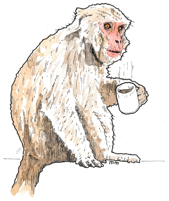 coffee monkey sm2