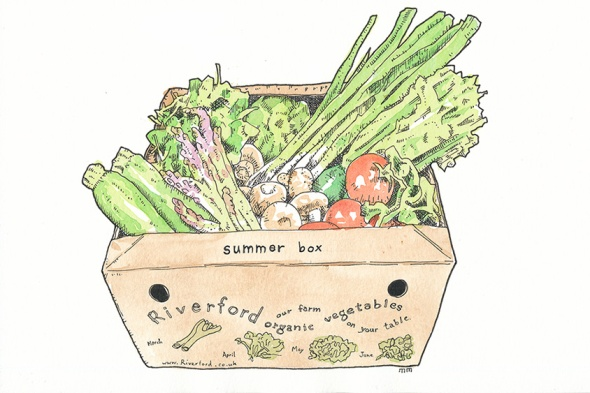 South West - Riverford box